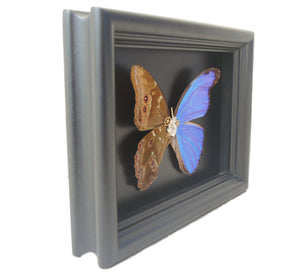 6x8 Mixed Media Steampunk Hybrid Shadow Box - Morpho Didius