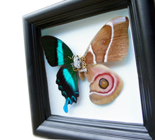 Load image into Gallery viewer, 5x5 Mixed Media Steampunk Shadow Box - Suraka Silk Moth and Papilio Daedalus Hybrid