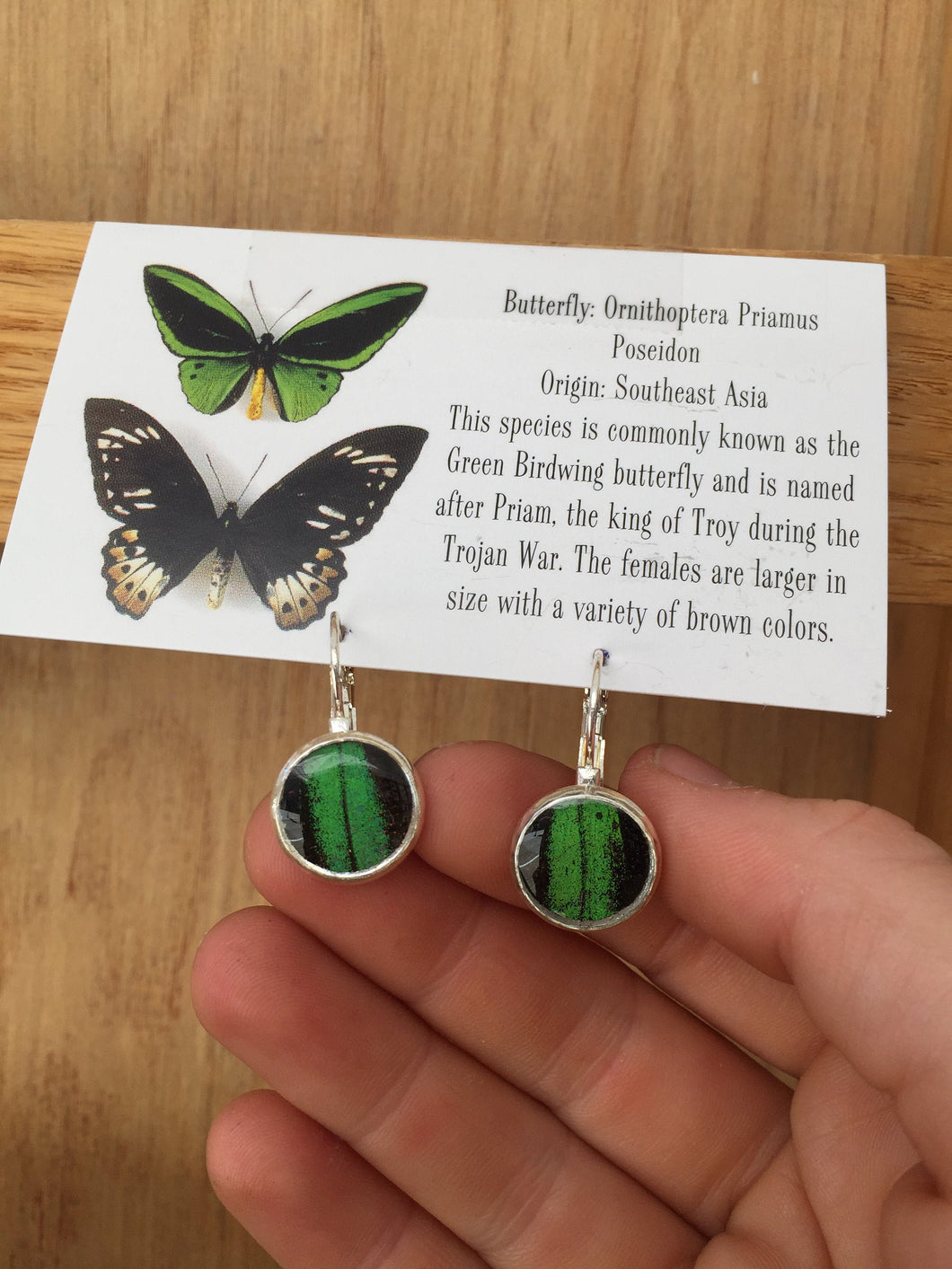 Real Butterfly Wing Drop Post Earrings - Birdwing butterlfy