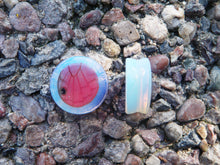 Load image into Gallery viewer, Real Butterfly Wing Circle Plugs - Opalescent Stone - Cithaerias Merolina
