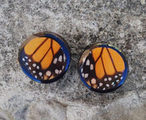 "Real Moth Wing Circle Plugs 1/2""-1 1/2""- Monarch Forewing - Body Jewelry, Gauges, Plugs"