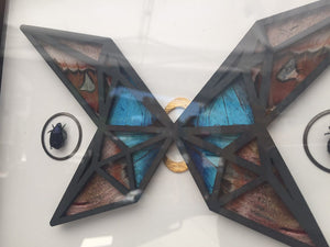 8x10 Real butterfly wing artwork - Atlas and Morpho in Abstract Butterfly Butterfly