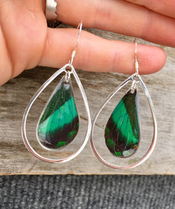 Real Emerald Green Butterfly Wing- Sterling Silver Earrings