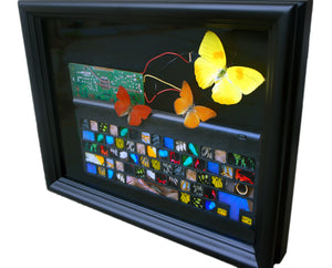 11x14 Real Butterfly Keyboard Modern Art