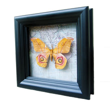 Load image into Gallery viewer, 5x5 Real Moth In Shadowbox Frame - Suraka Silk Moth