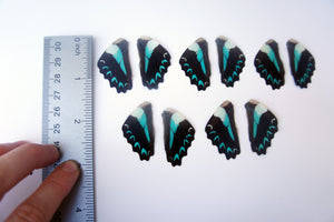 Real Graphium Milon butterfly wings for crafting and art projects - nature jewelry supplies
