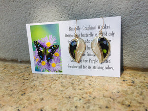 Real Butterfly Wing Earrings with Pearl Shell in Sterling Silver - Graphium Weiskei