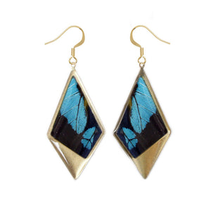 Real Blue Butterfly Kite Pendant Earrings - Papilio Bromius