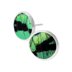 Green Butterfly Wing Post Earrings - Sunset Moth Forewing