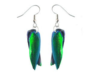Real Beetle Wing Earrings - Front and Back