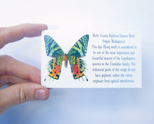 Load image into Gallery viewer, Real Butterfly Wing Dropped Post Earrings - Rainbow Sunset Moth