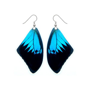 Real Butterfly Earrings - Papilio Ulysses