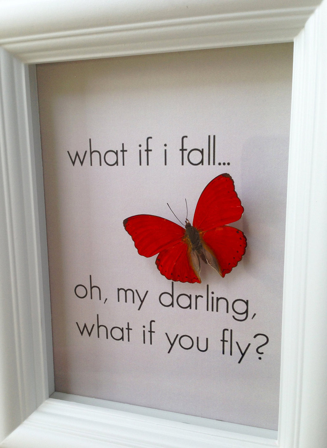 5x7 Inspirational Butterfly Shadowbox - Cymothoe Sangaris