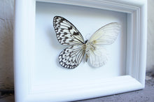 Load image into Gallery viewer, 5x7 Mixed Media Steampunk Butterfly Shadow Box - Rice Paper With Scales Removed