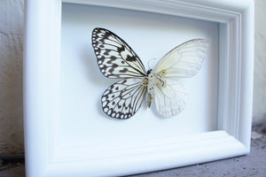 5x7 Mixed Media Steampunk Butterfly Shadow Box - Rice Paper With Scales Removed