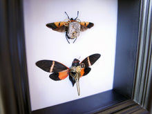 Load image into Gallery viewer, 5x5 Mixed Media Steampunk Shadow Box - Man Face Bug and Orange Cicada