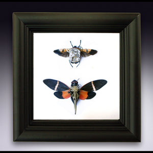 5x5 Mixed Media Steampunk Shadow Box - Man Face Bug and Orange Cicada
