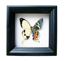 Load image into Gallery viewer, 5x5 Mixed Media Steampunk Shadow Box - Sunset and Papilio Dardanus Hybrid