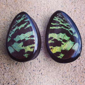 "Real Moth Wing Teardrop Plugs 1/2""-1 1/2""- Green Sunset Moth - Body Jewelry, Gauges, Teardrop Plugs"