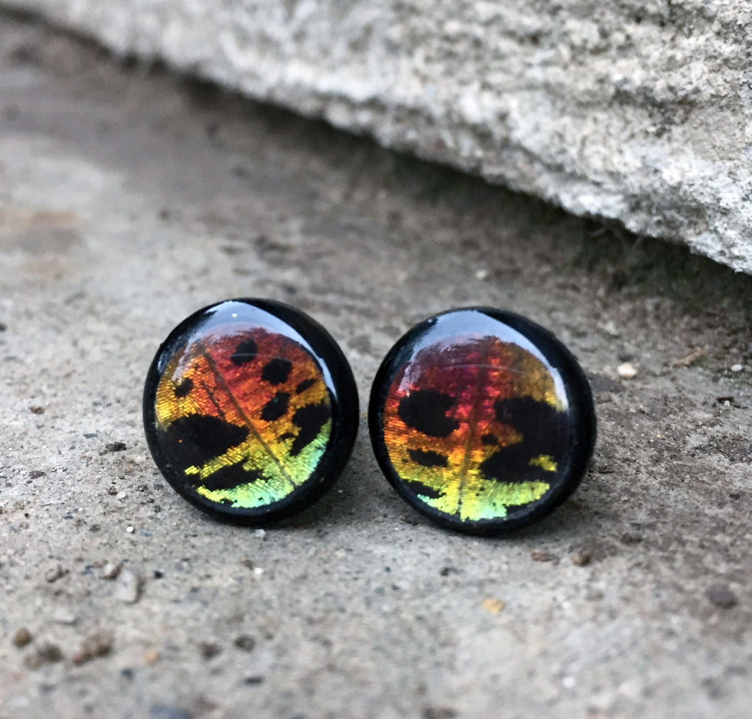 Real Butterfly Wing Plugs - 2G-00G - Rainbow Sunset Moth