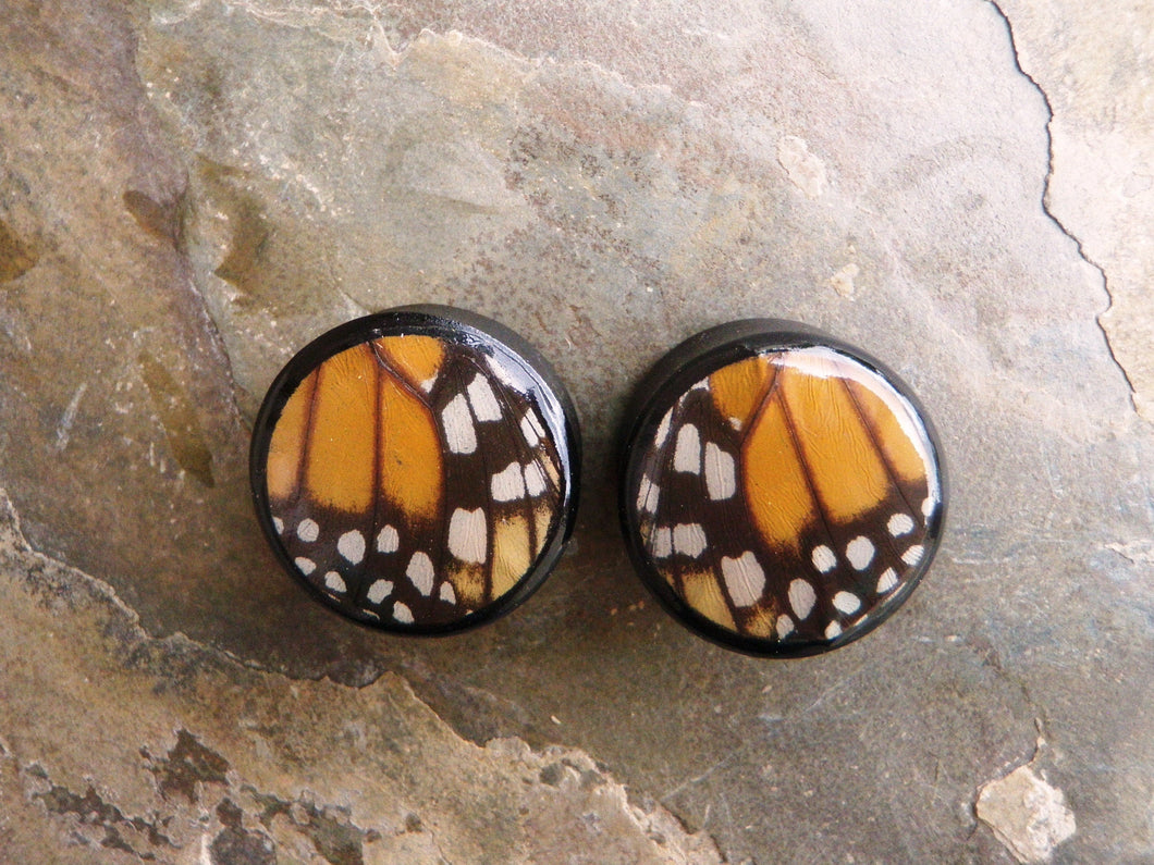 Real Moth Wing Circle Plugs 1/2
