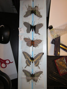 Butterfly Wings for Craft and Art Projects