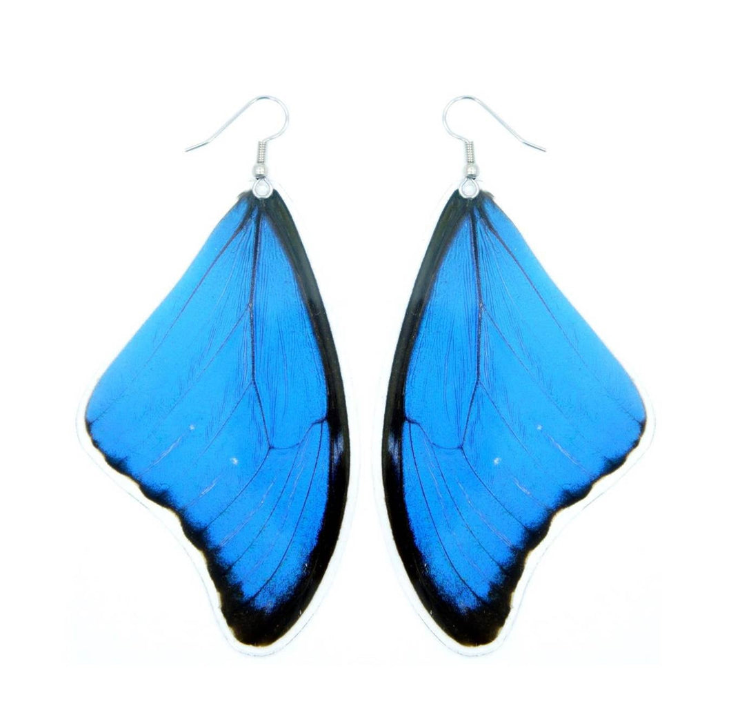(LARGE SIZE) Real Blue Morpho Butterfly Wing Earrings