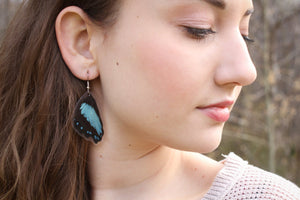 Real Butterfly Wing Earrings - Papilio Bromius