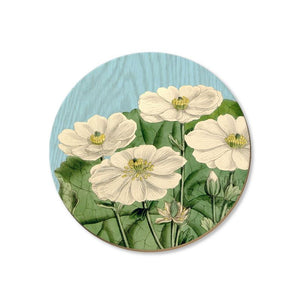 New Zealand Bird and Flower Coasters