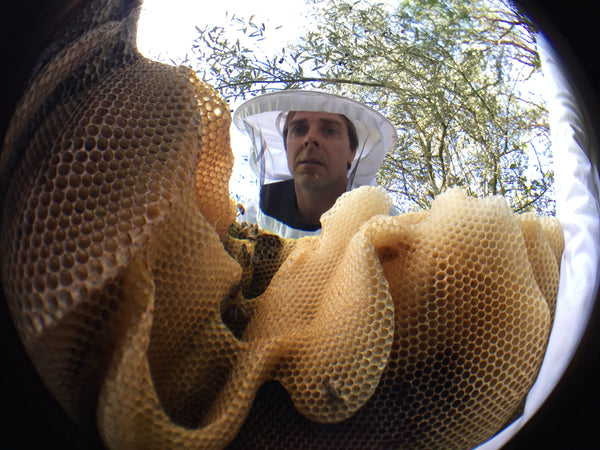 Saving the Bees with Simon Mulvany