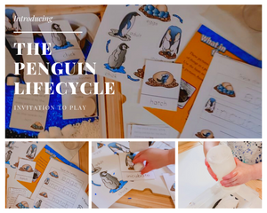 Penguin Lifecycle - Invitation to Play