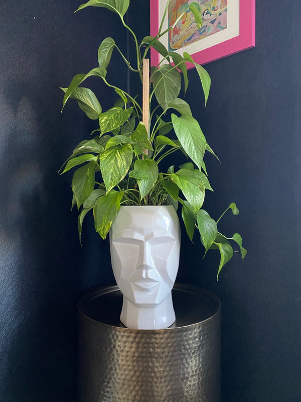 Angular Face Planter