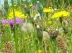 Premium Wildflower Only Mix  (no grasses) - Goren Farm Seeds