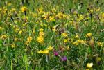 Premium Plus(+) Wildflower and grass mix - Goren Farm Seeds