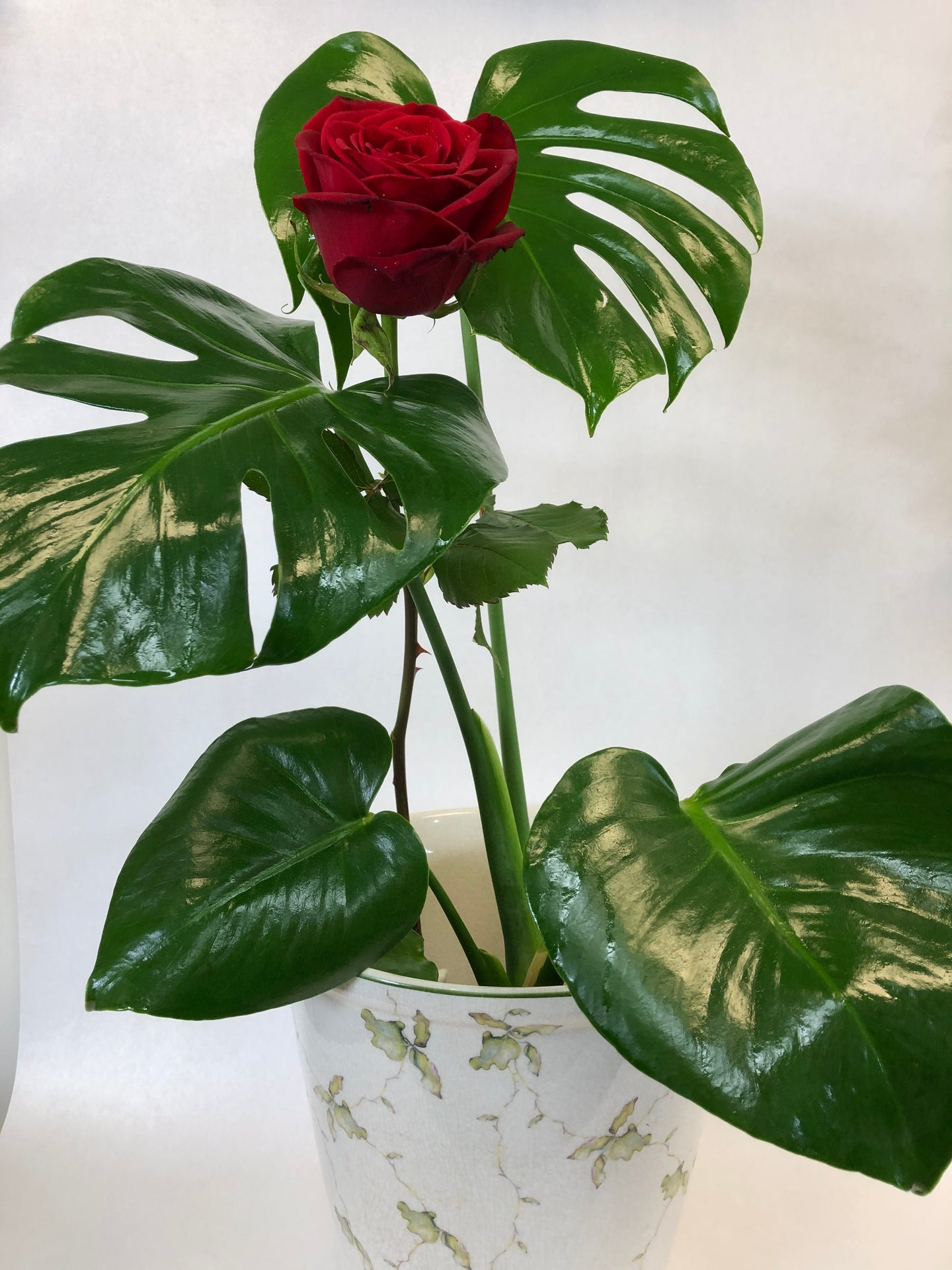 Monstera with red rose