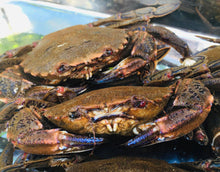 Load image into Gallery viewer, Velvet Crabs - Necora puber