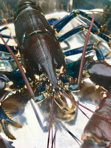 Lobsters - Homarus gammarus