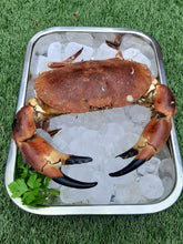 Load image into Gallery viewer, Extra Large Edible Crabs - Cancer pagurus