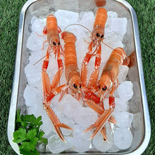 Load image into Gallery viewer, Langoustines  FIFE DELIVERY - FRIDAY