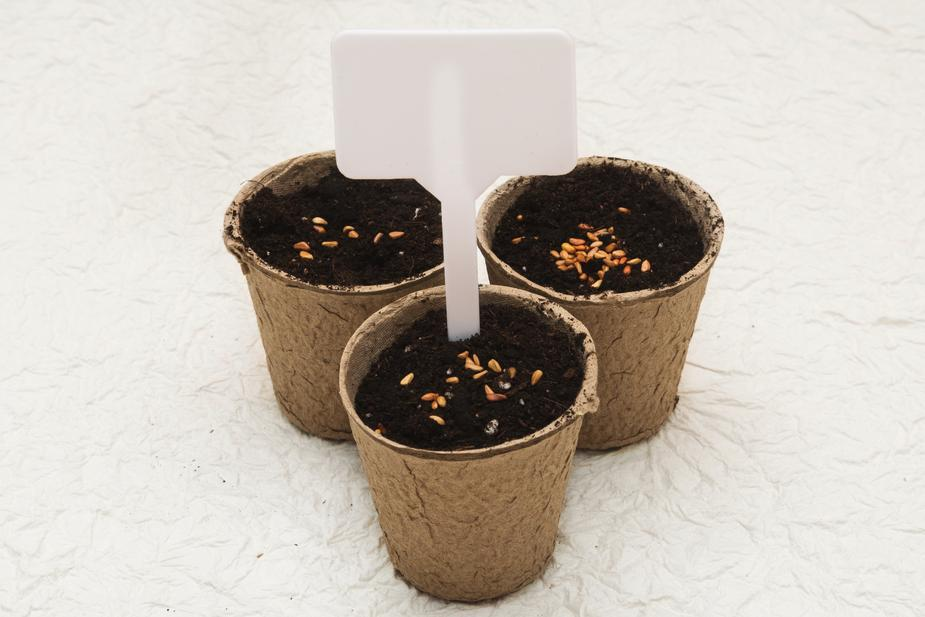 Biodegradable cardboard pots