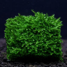 Load image into Gallery viewer, Mini Christmas Xmas Moss