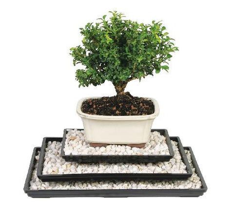 Bonsai Tree Humidity Tray