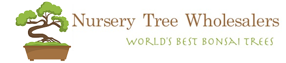 Nursery Tree Wholesalers