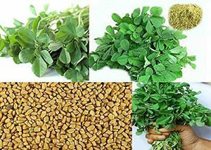Certified Organic Fenugreek Leaf Methi Powder Immune Digestion Vitamin C A Iron