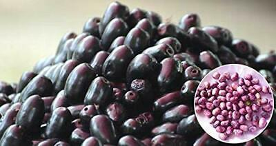 Certified Organic Jamun Seed Powder ( Indian Black Berry, Black Plum) Supports Suger