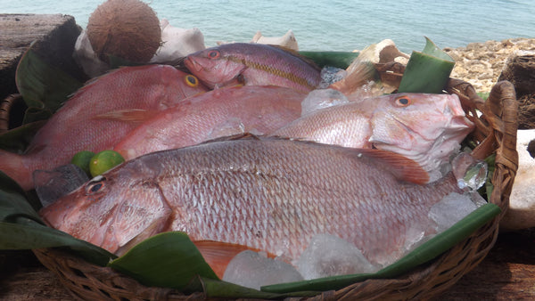 Pargo Rojo (Red Snapper)