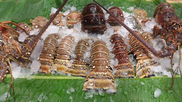 Cola de Langosta (Lobster Tail)