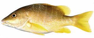 Pargo Rubia (Golden Snapper)