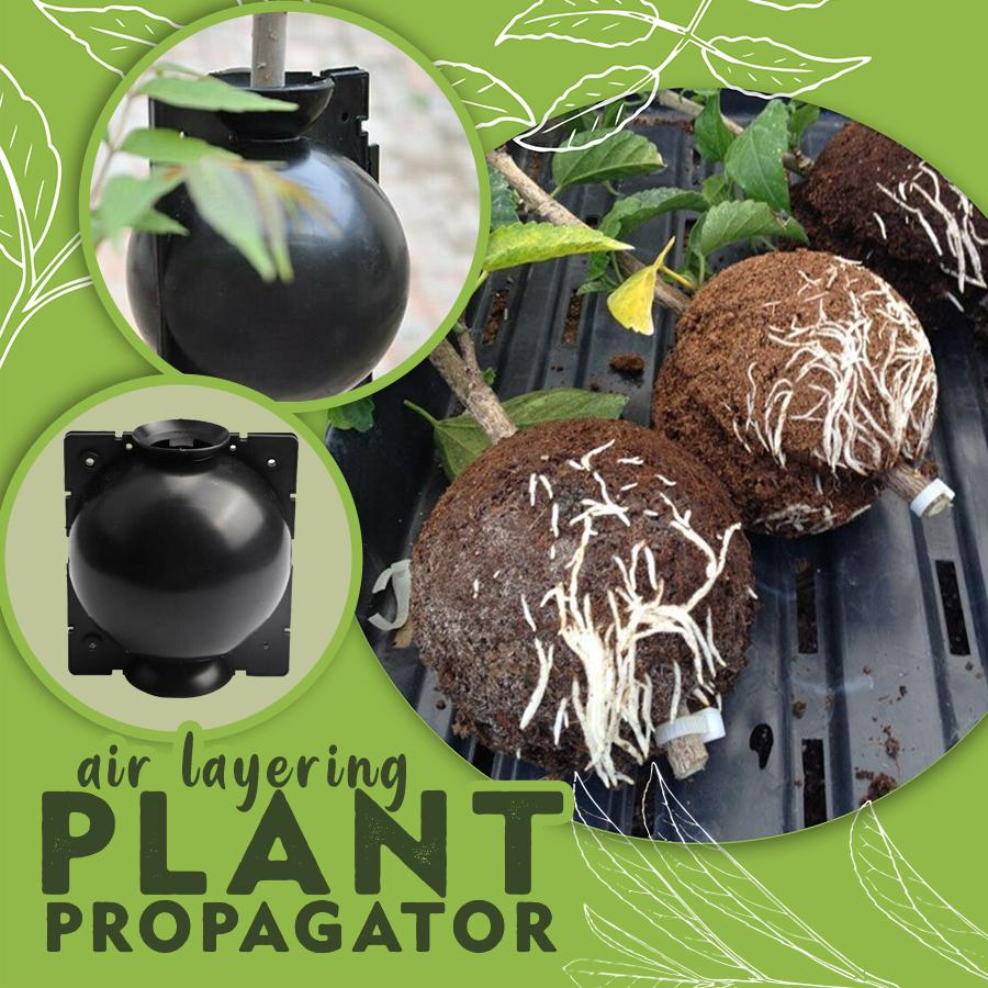 Air Layering Plant Propagation Ball - Durian Plaza