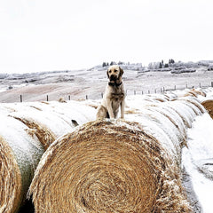 Guarding the Ranch